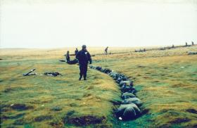 Argentine PoWs being guarded near Goose Green, 28-29 May 1982.