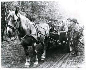 Men of 101st US Airborne Division on a horse and cart in Veghel.