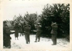 German prisoners at Bure with their hands on their heads.
