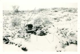 Private Lowton in covert observation position on snowy ground.