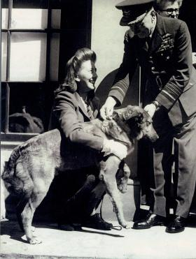 Betty Fetch and Brian receiving his PDSA Dickin Medal from Air Chief Marshall Sir Frederick Bowhill, 1947