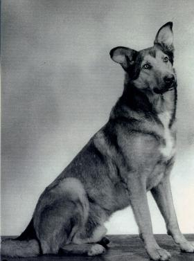 A portrait of Brian the Para Dog, 1947