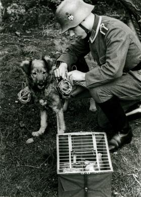 A German soldier with a messenger dog and carrier pigeon, used during the Second World War