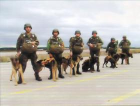 Portuguese Para Dogs with handlers rigged up with MC1-1Cs
