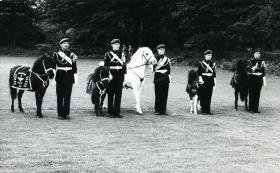 Regimental mascots on parade, Aldershot, early 1960s