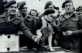 Rob the Para Dog receiving his PDSA Dickin Medal, January 1945.