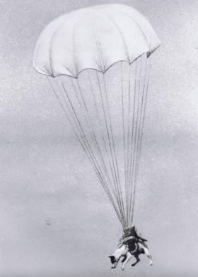 Salvo, a US Para Dog during a parachute exercise at St Andrew's Field, 1943