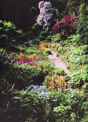Part of Trebah Gardens restored by Tony & Eira Hibbert, 2009.
