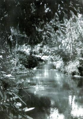 The river at Nibong Village, 1965.