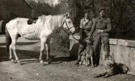 Two members of Scout Platoon, 13th Para Bn, with Para dogs and horse, c1945.