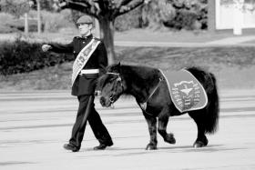 Pony Major Pte Adam Martin with Pegasus, 755 Pln Passing Out Parade, 17 May 2013.