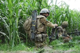 3 PARA operating in fields of crops, Musa Qala, Afghanistan, August 2008.