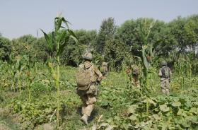 Soldiers of B Coy, 3 PARA patrolling through undergrowth in Musa Qala, Afghanistan, August 2008.