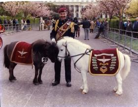 Pegasus 3 and Dodger on ceremonial duties, location unknown, c.1990s